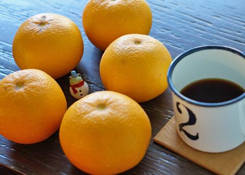 酸味[●●○○○]、甘味[●●●●○]の柑橘に感謝でしょ(笑)↑…。