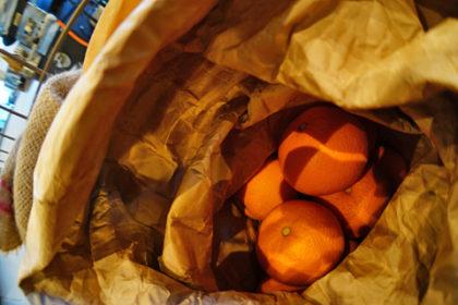 今年もたわわに実った柑橘っ…